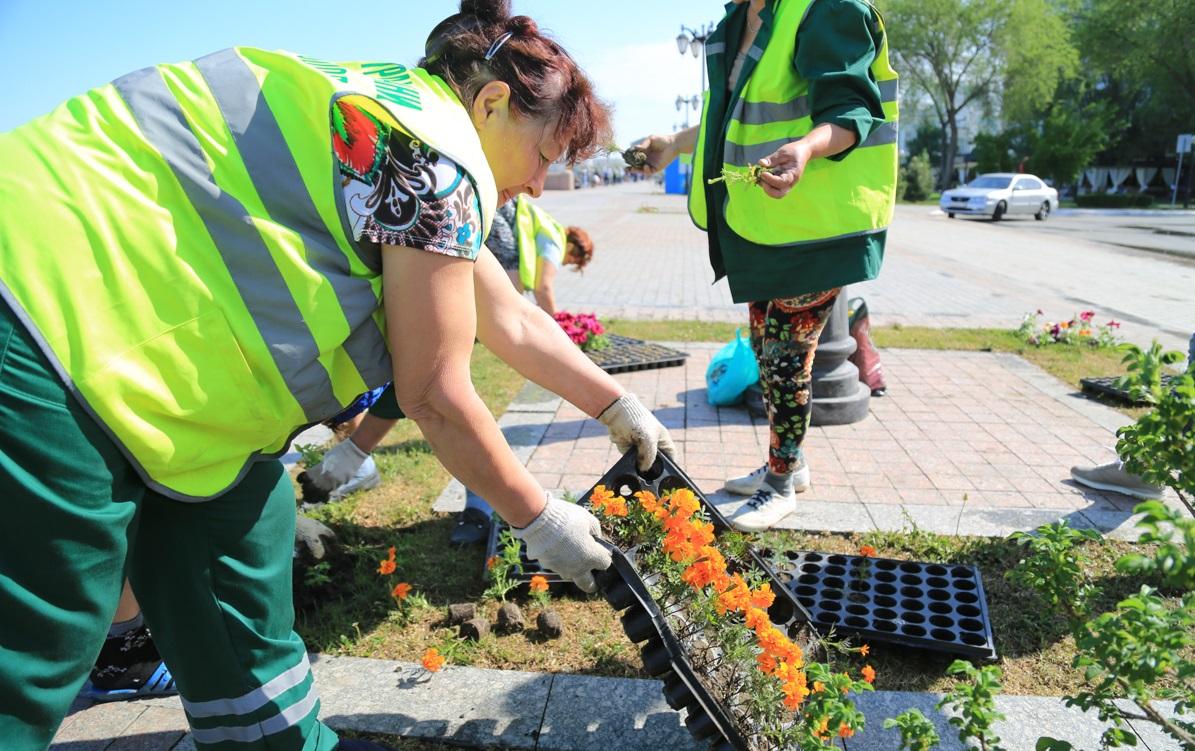 Почти половина зеленых насаждений в Астрахани уничтожается