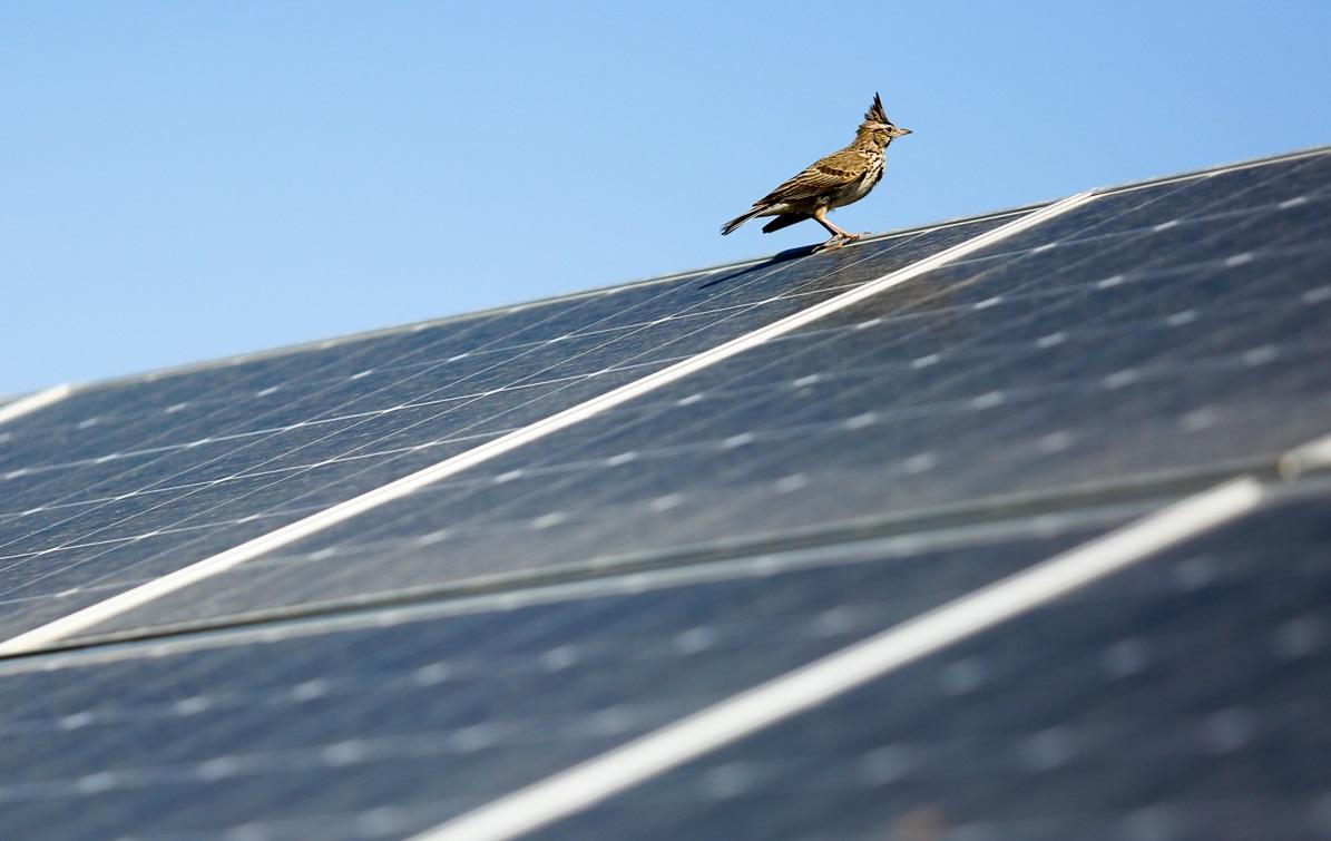 В селе Солянка появилась солнечная электростанция китайской сборки