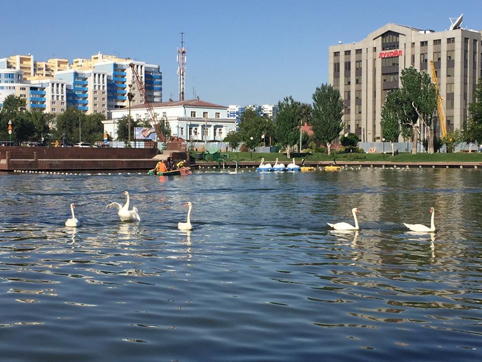 Лебеди в Лебедином озере будут гибнуть и дальше
