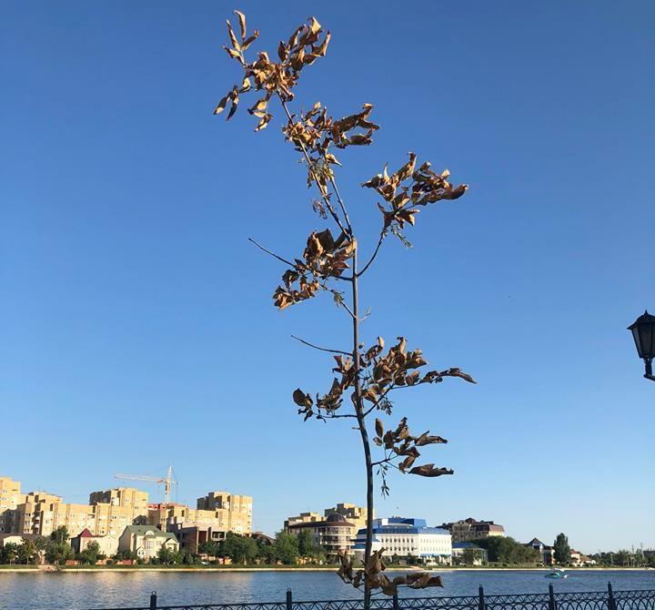 Аллея Семьи на набережной Приволжского затона засыхает