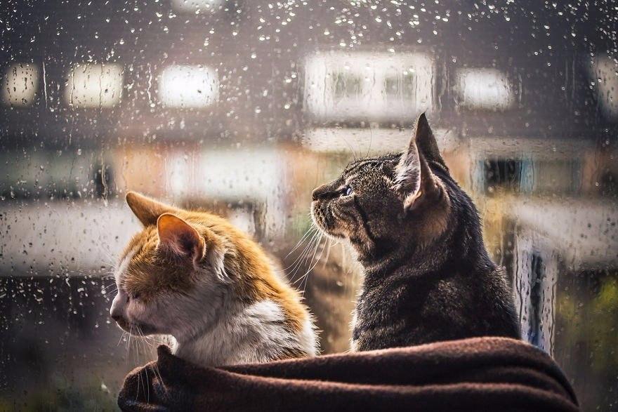 кот, дождь