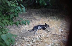 Астраханские догхантеры вновь травят животных