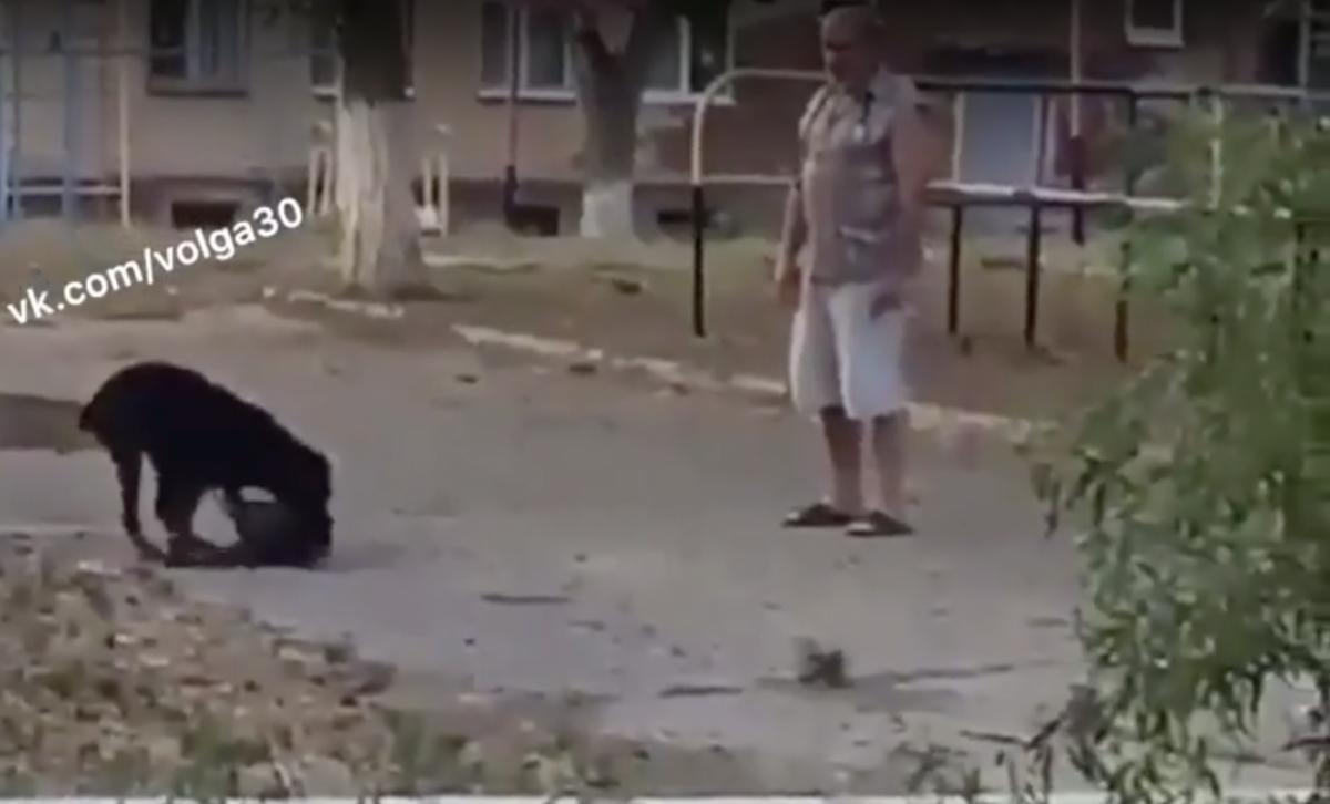 В Астрахани натравили пса на бездомного котика во дворе школы