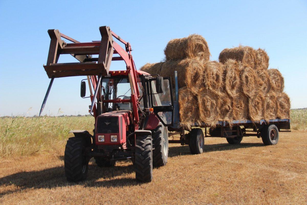 Астраханские аграрии активно косят сено и готовят корма