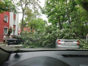 Около астраханского кремля упало дерево