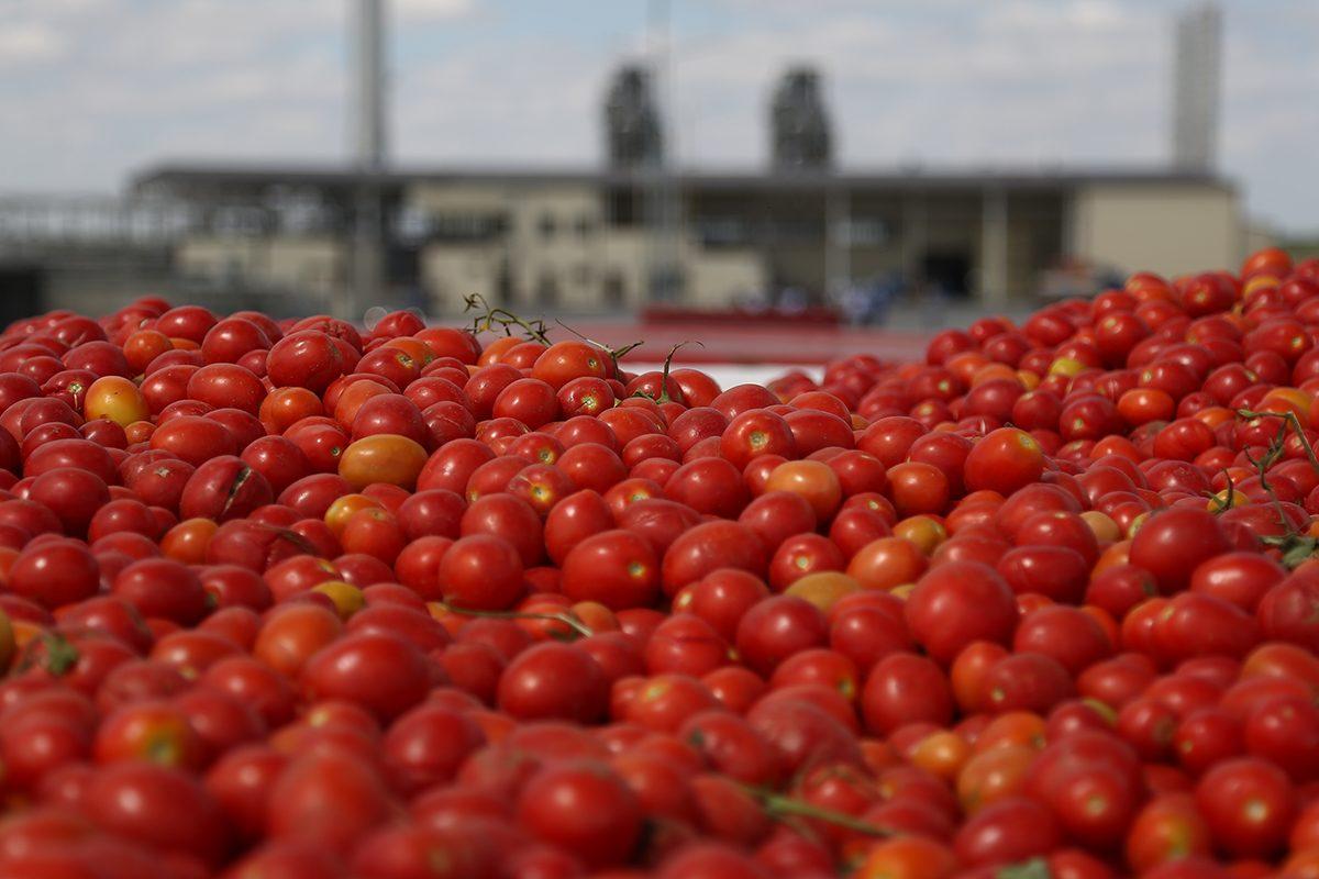 Отходы с астраханского завода томат-пасты отправятся в Калмыкию