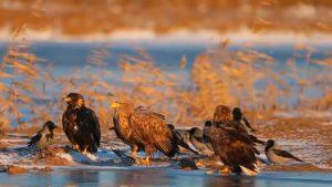 Красивое видео про Астраханский заповедник
