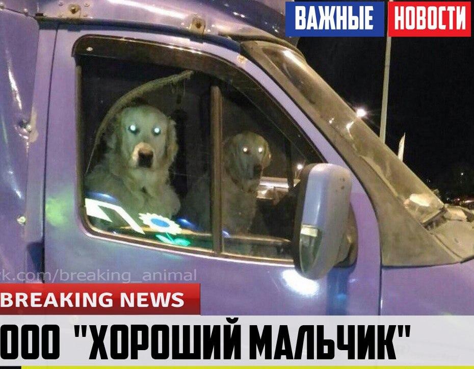 Радик Харисов проинспектировал ход строительства собачьего приюта