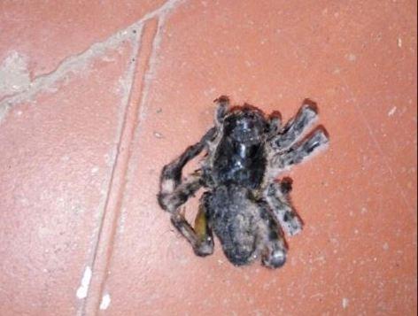 Астраханские коты настолько суровы, что спасают хозяев от пауков