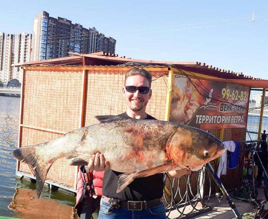 Астраханцы вылавливают огромных рыбин в городских каналах и не боятся их есть