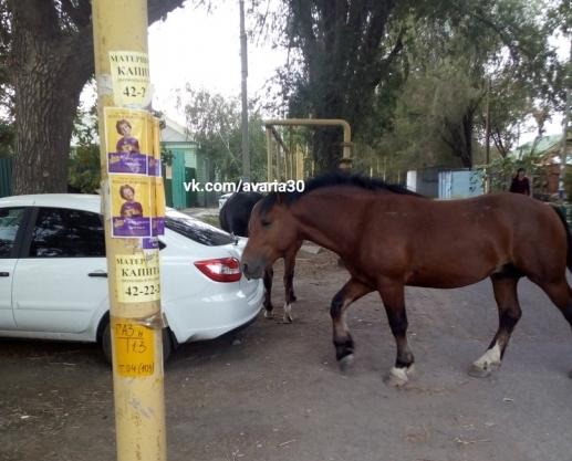 Астраханские лошадки гуляют и мнут автомобили
