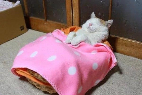 Астрахань — самый кошачий город России