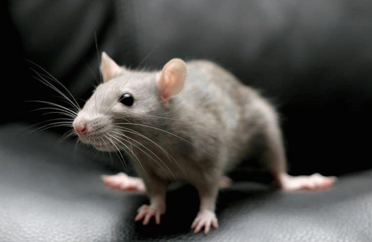 В одном из популярных заведений Астрахани мыши смело бегают под ногами