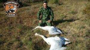 Астраханцы спорят об этичности охоты на лебедей