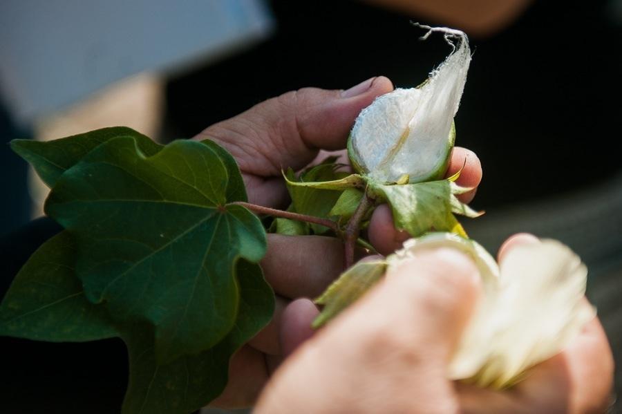 Узбекистан поможет Астраханской области в выращивании хлопка