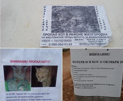 В Астрахани массово пропадают кошки