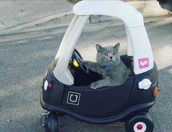 В Астрахани заработало такси для кошечек и собачек