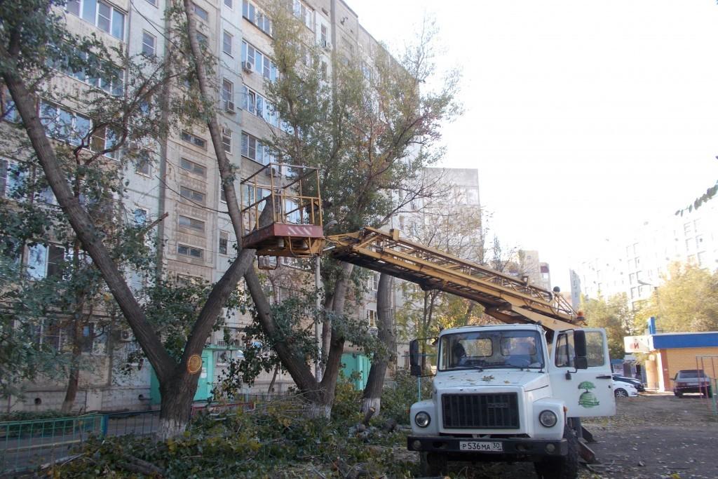 В Астрахани утвержден график опиловки деревьев