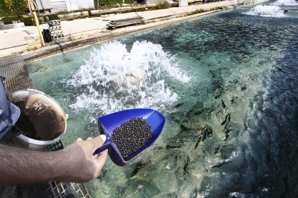 В Астраханской области может появиться крупнейшее производство рыбных кормов