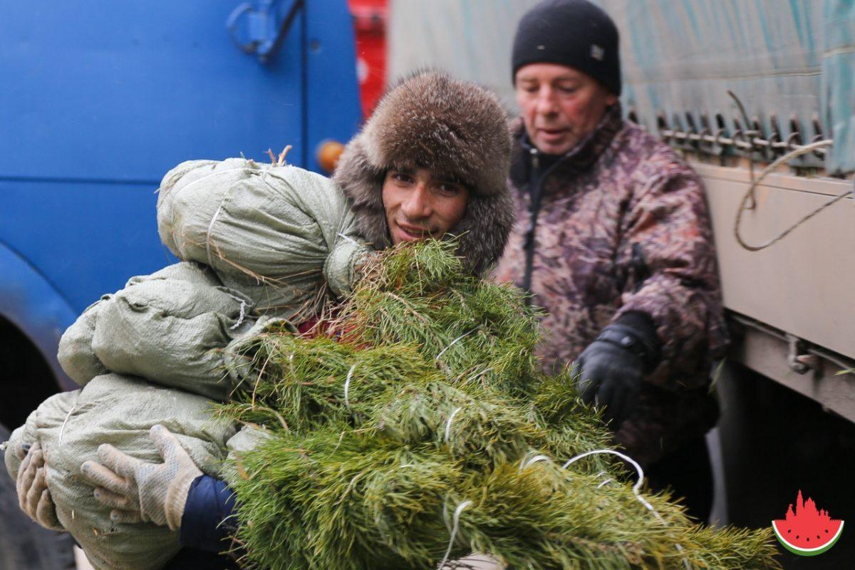 В Астрахань начинают завозить первые елки для продажи
