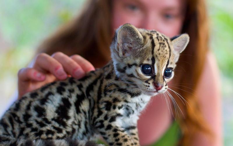 Россиянам запретят держать диких животных в квартирах