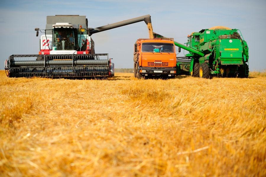 В России стремительно взлетели цены на зерно