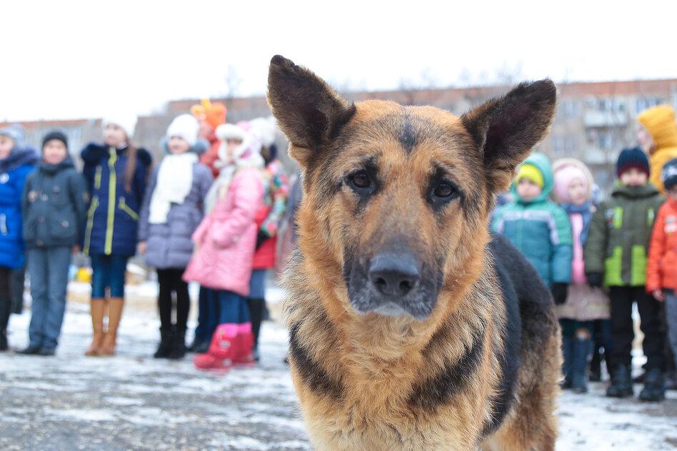 Стало известно, что будет с бродячими собаками в Астраханской области