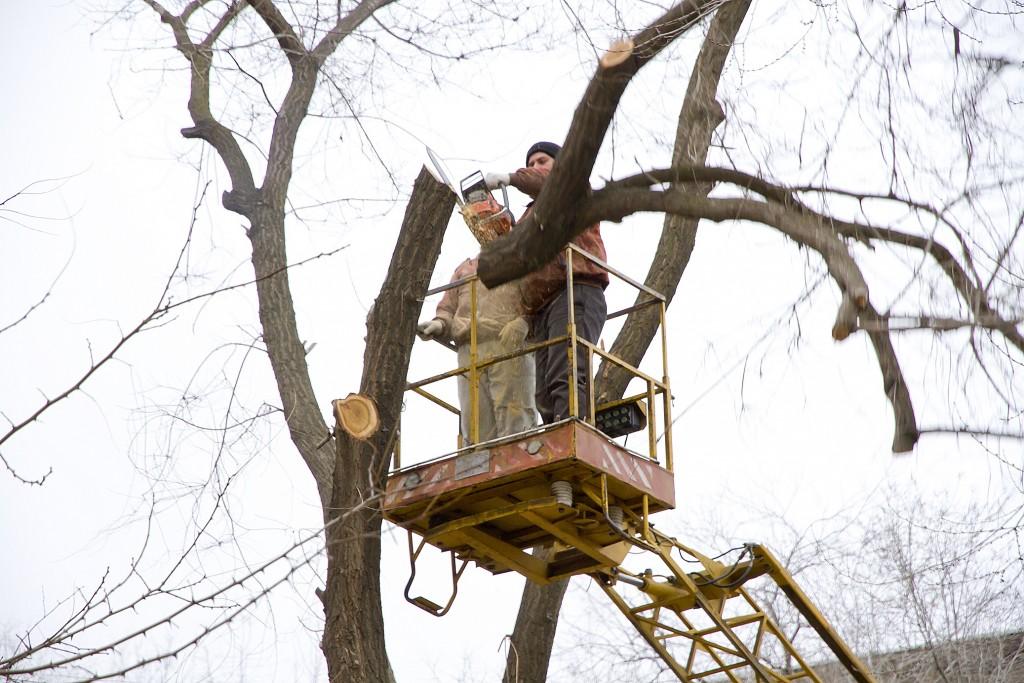 В сквере Астрахани снова начнут пилить деревья