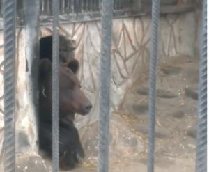 В астраханском зоопарке медведь вышел из зимней спячки