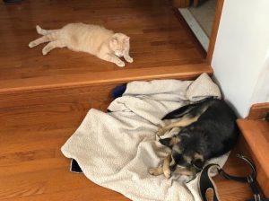 Бездомная собака из Астрахани уехала жить в Америку