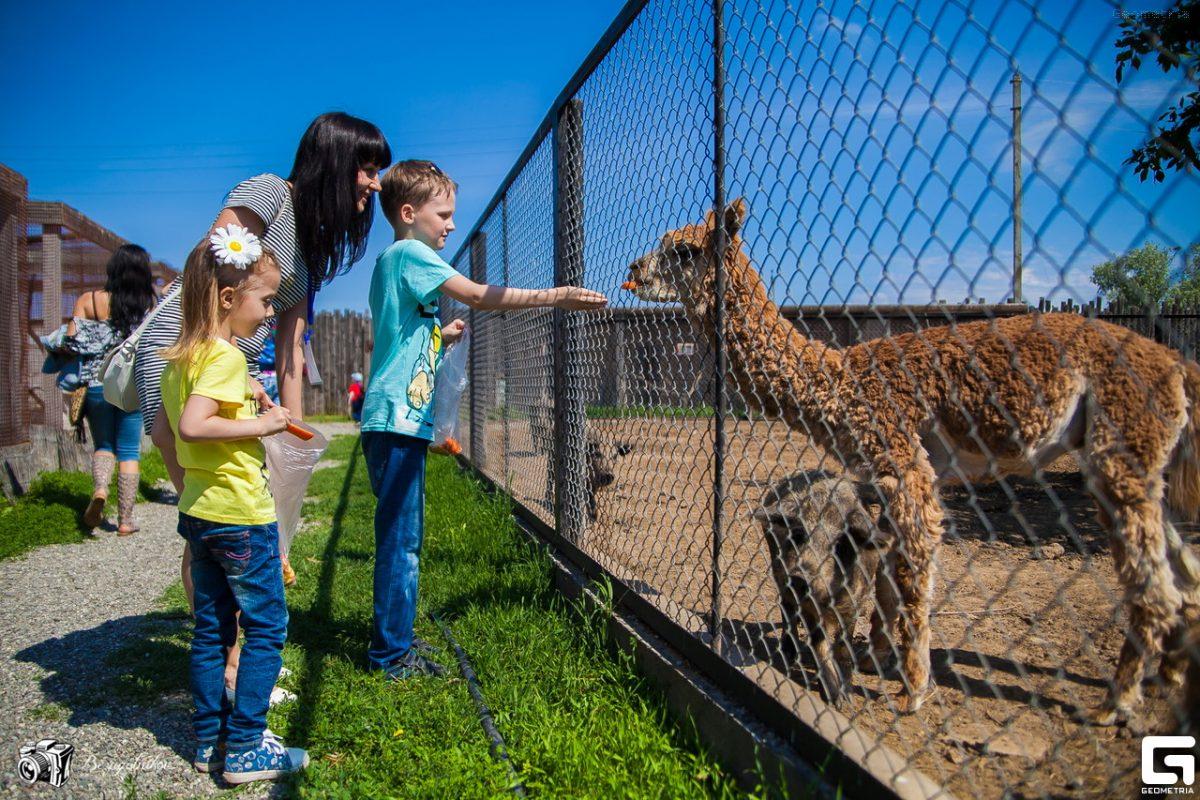 Зоопарк «Баба Фрося» собрал больше 300 тыс. рублей помощи