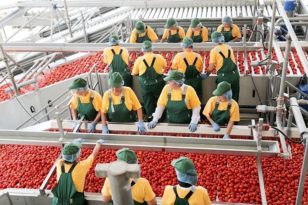 В Енотаевском районе построят завод по производству томат-пасты
