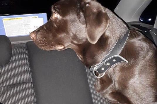 Астраханские зоозащитники спасли пса от жесткого хозяина