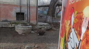 На улице Бориса Алексеева поймали орлана-белохвоста