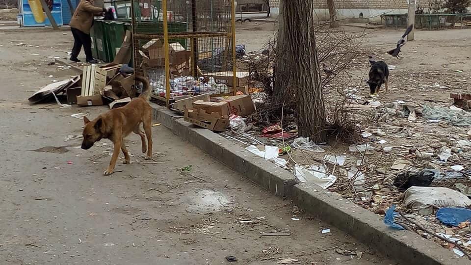 Астраханские «фронтовики» поговорят о бродячих собаках