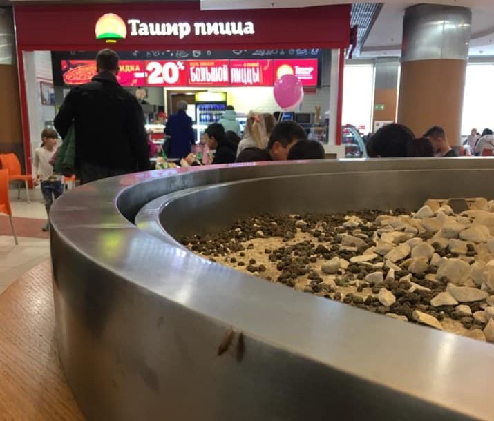 В крупнейшем ТЦ Астрахани по фудкорту бегают тараканы