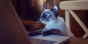 Астраханок шантажируют разоблачением в соцсетях