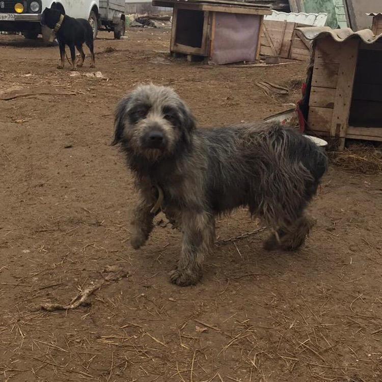 Еще один бездомный астраханский пес переезжает за границу