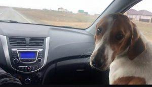 Астраханским депутатам хотят предложить взять себе по бездомной собаке