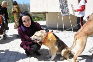 В Астрахани прошла выставка-раздача бездомных животных