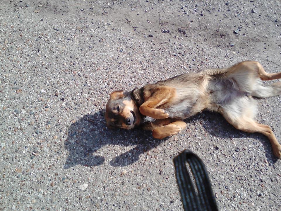 Астраханский Роспотребнадзор: Проблема с собаками, конечно, есть