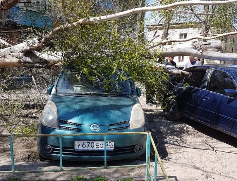 Тополь упал на две машины в Астрахани