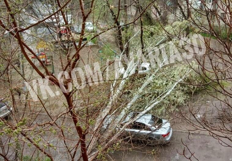 В Астрахани вновь на машину упало дерево