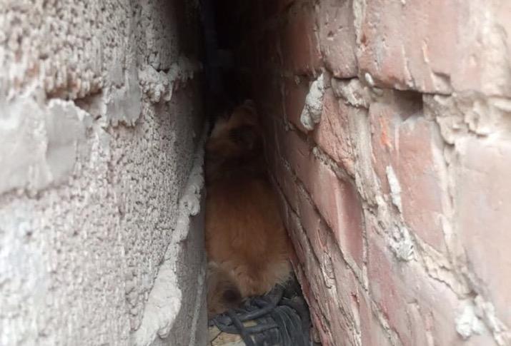 Астраханцы помогли застрявшей собаке. Животное почти неделю просидело в ловушке