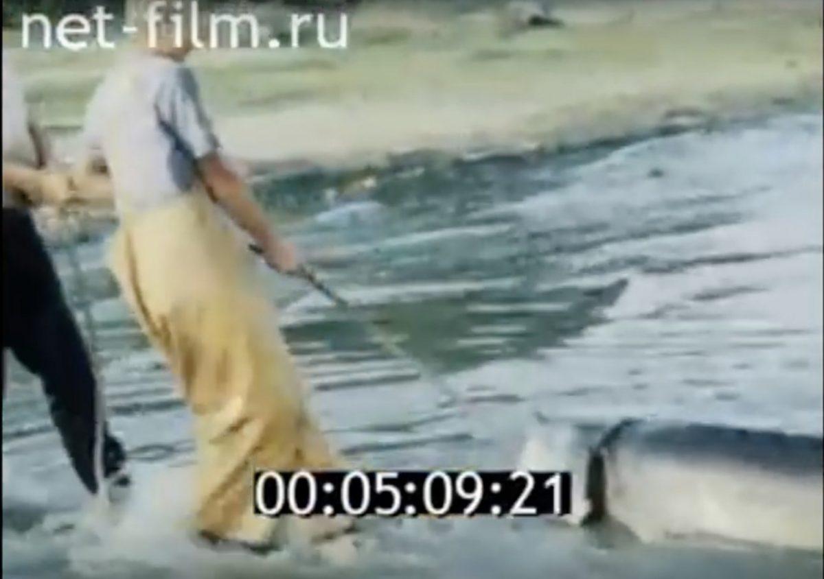 Архивное видео: как рыбачили в 1989 году. Осетры размером с человека