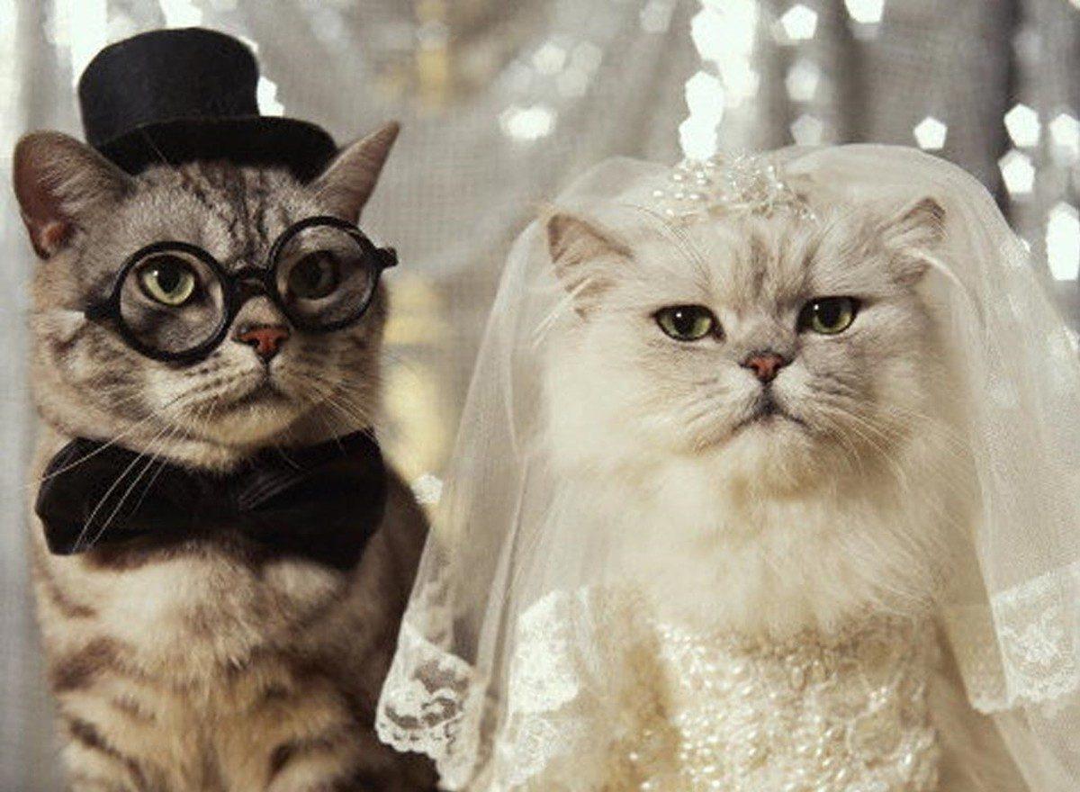 Астраханцев просят сегодня не разводиться