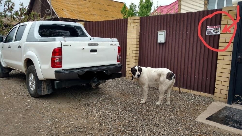 Астраханец спокойно отправляет крупную собаку гулять без намордника