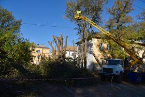 В Астрахани с начала года обрезали три тысячи деревьев