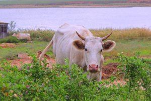 Астраханский фермер отправился в колонию за невыплату 100 млн рублей по кредитам