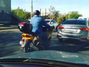 Астраханские псы предпочитают мотоциклы